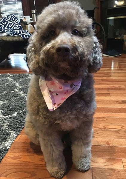 dog with pink bandana